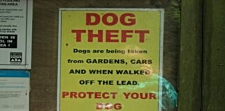 Dog Theft Poster